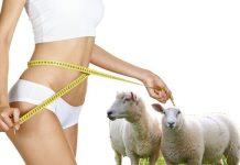 uống nhau thai cừu có tăng cân không